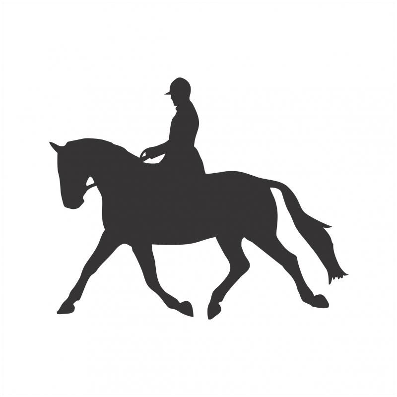 Best Buddy - Horse Dressage Rider Sticker