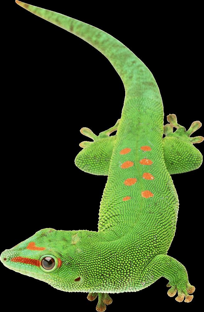 Reptile Accessories